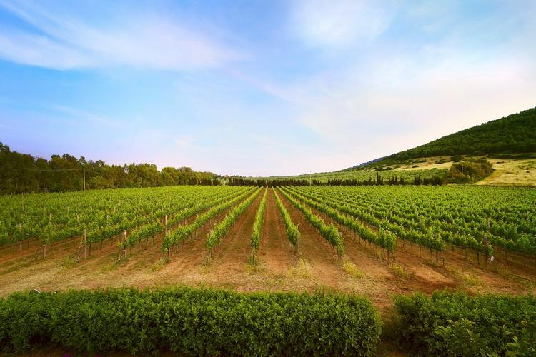 Wine Resort Leda L'Ittiri - Alghero