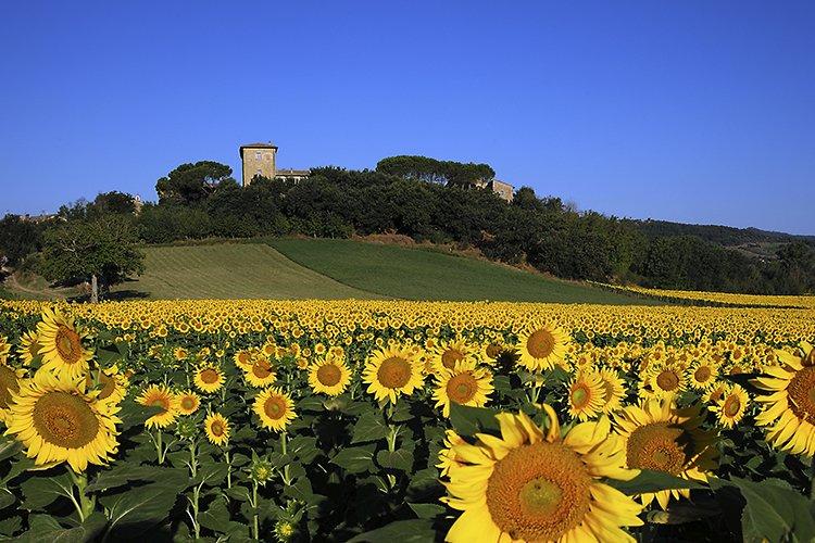 Castello Monticello