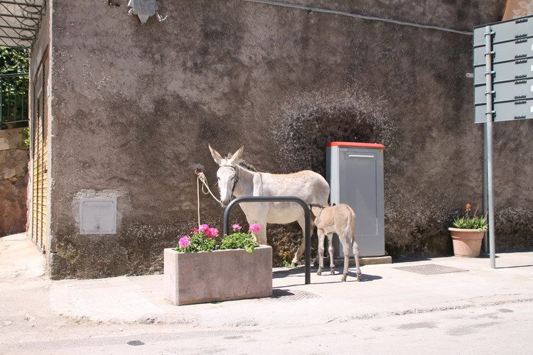 Sardinie Autorondreis